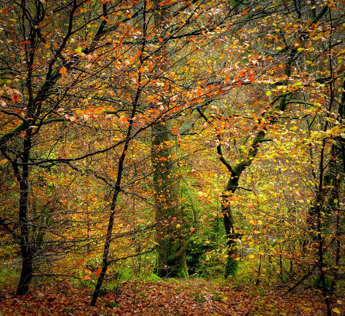 l_autumn woodland