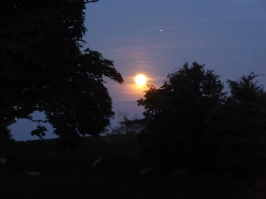 26. Moonlight